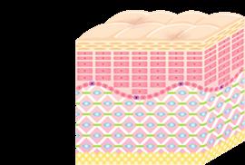 CHANGE3 | コラーゲン構造がリフトアップ、肌を改善します